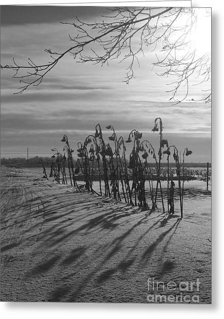 Greeting Card featuring the photograph Sunflowers In The Winter Sun by Mary Mikawoz