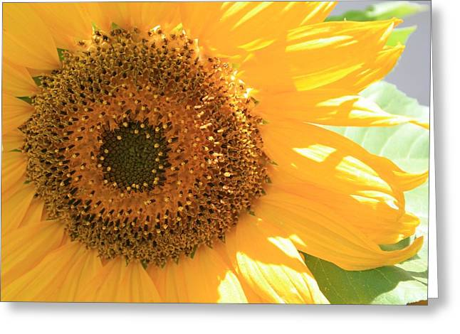 Sunflowers  Greeting Card by Marna Edwards Flavell