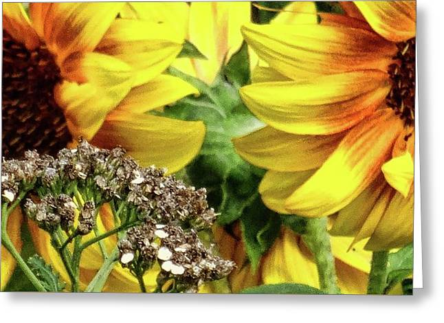 Sunflowers Greeting Card by Mikki Cucuzzo