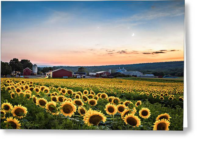 Greeting Card featuring the photograph Sunflowers, Moon And Stars by Eduard Moldoveanu