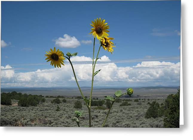 Sunflowers On The Gorge Greeting Card