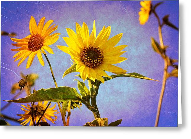 Greeting Card featuring the photograph Sunflowers - The Arrival by Glenn McCarthy Art and Photography