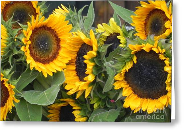 Greeting Card featuring the photograph Sunflowers Two by Chrisann Ellis
