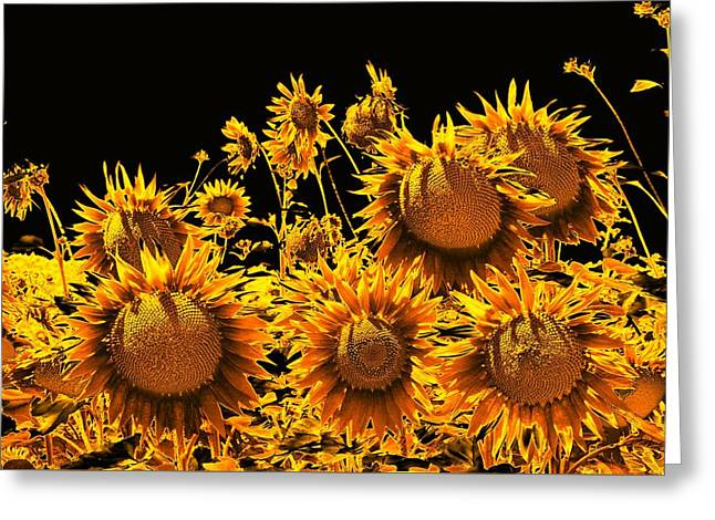 Sunflowers Up Front And Personal Greeting Card
