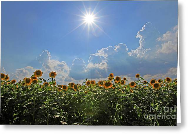 Sunflowers With Sun And Clouds 1 Greeting Card