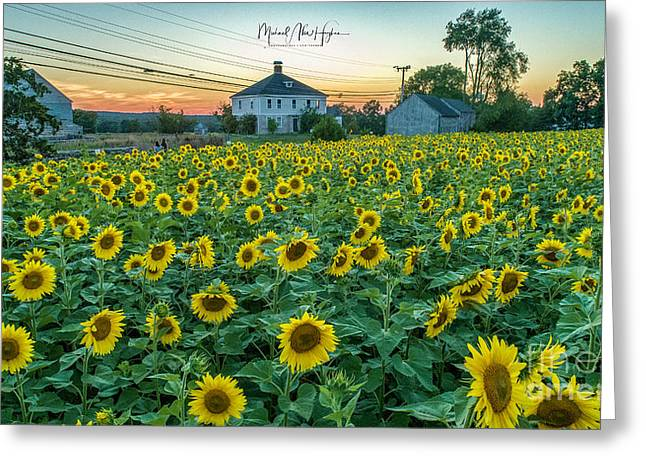 Sunflowers For Wishes  Greeting Card