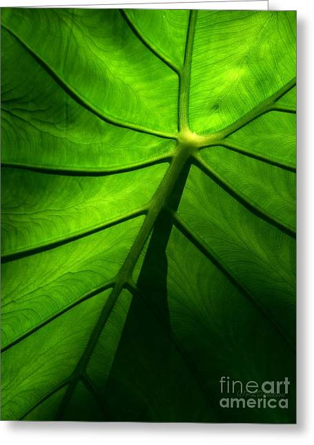 Glow Greeting Cards - Sunglow Green Leaf Greeting Card by Patricia L Davidson
