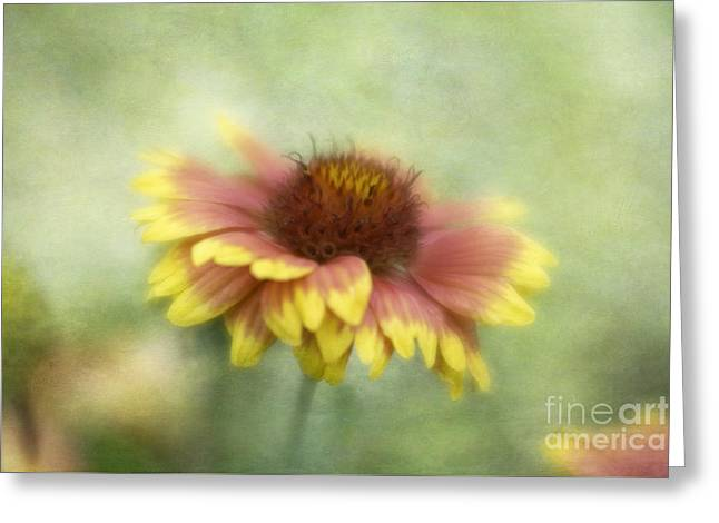 Sunkissed Greeting Card by Cindy McDonald