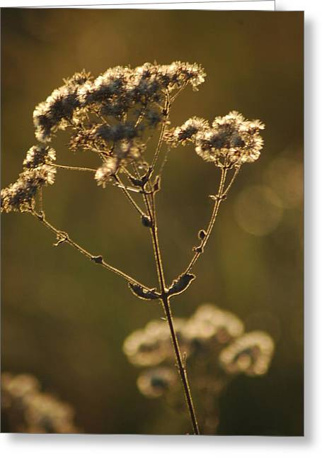 Sunkissed Greeting Card by Lori Mellen-Pagliaro