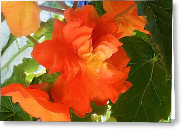 Sunkissed Orange Begonias Greeting Card