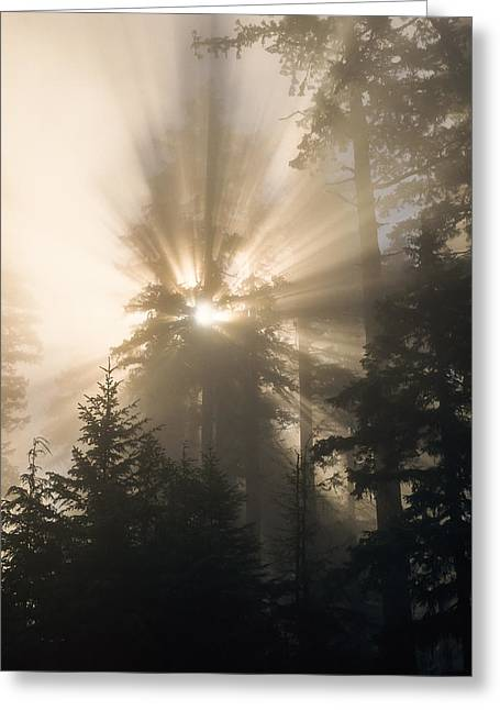 Sunlight And Fog Greeting Card