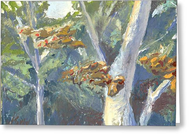 Sunlight And Sycamores Greeting Card