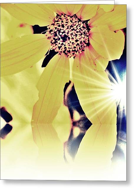 Sunlight Creeping Through Greeting Card by Ashley Vaughn