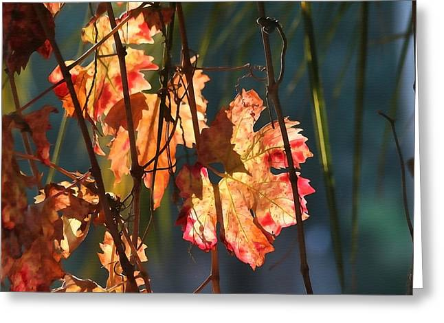 Sunlight In The Vineyard Greeting Card by Art Block Collections