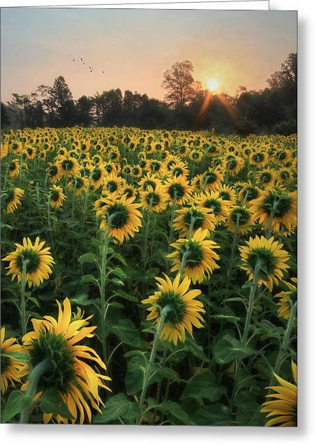 Sunlight Greeting Card by Lori Deiter