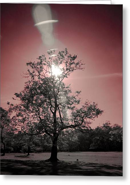 Sunlight Greeting Card by Mario Bennet