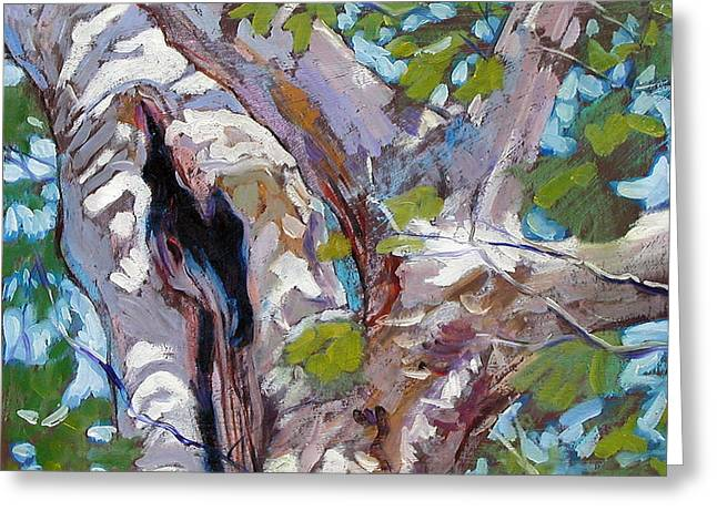 Sunlight On Sycamore Greeting Card by John Lautermilch