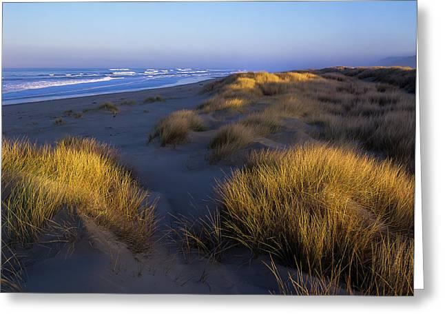 Sunlight On The Beach Grass Greeting Card