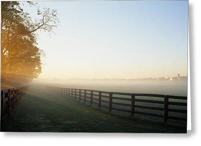 Sunlight Passing Through Trees, Horse Greeting Card by Panoramic Images