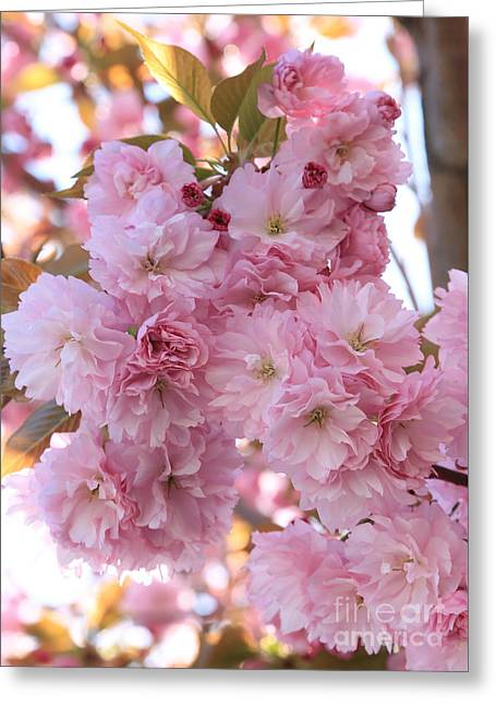 Sunlight Through Pink Blossoms Greeting Card