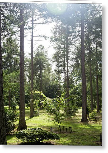 Greeting Card featuring the photograph Sunlight Through The Trees by Scott Lyons