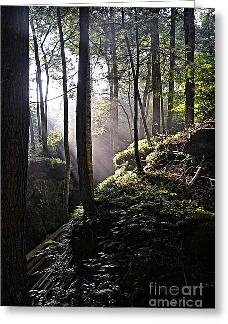 Sunlight Through Trees At Beartown State Park 3129c Greeting Card