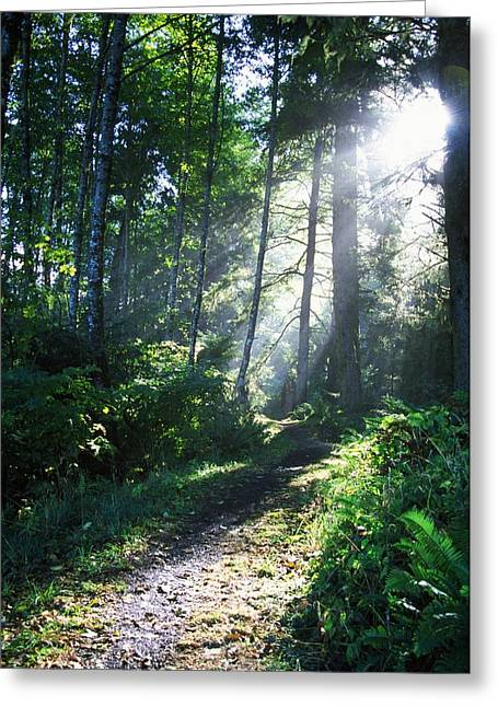 Sunlight Through Trees, Ecola State Greeting Card