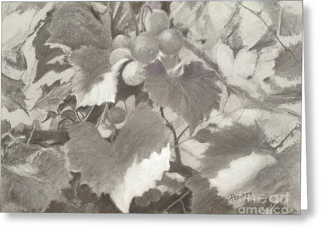 Sunlit Arbor Greeting Card
