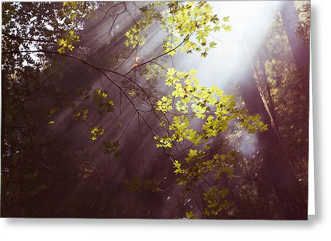 Greeting Card featuring the photograph Sunlit Beauty by Lora Lee Chapman