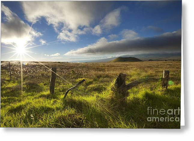 Greeting Card featuring the photograph Sunlit Country Field - Big Island by Charmian Vistaunet
