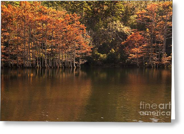 Greeting Card featuring the photograph Sunlit Cypress Trees On Beaver's Bend by Tamyra Ayles