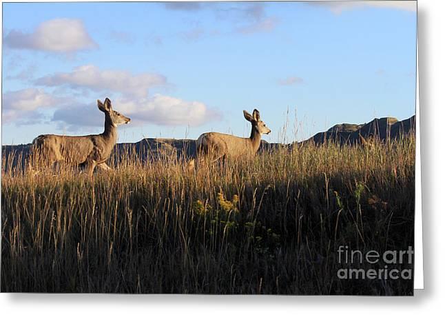 Sunlit Deer  Greeting Card