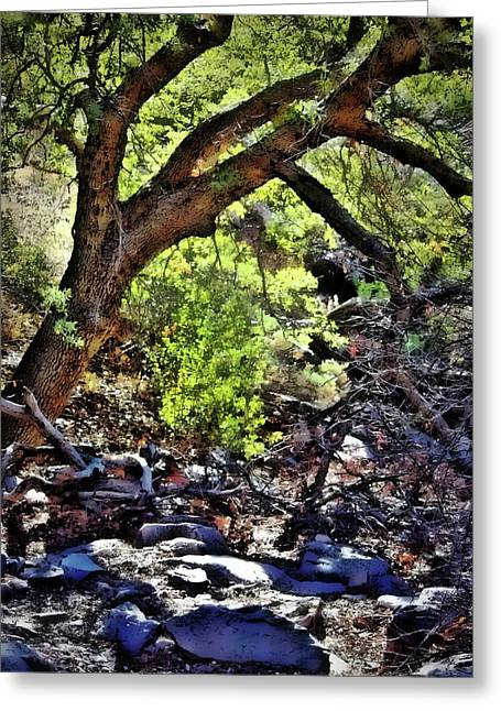 Sunlit Desert Canyon Tree Greeting Card by Barbara Chichester