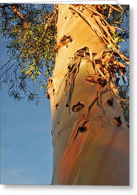 Sunlit Eucalyptus Greeting Card by Jean Booth