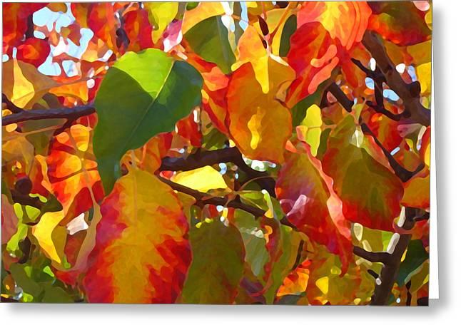 Sunlit Fall Leaves Greeting Card by Amy Vangsgard