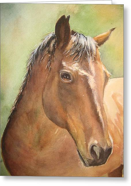 Sunlit Horse Greeting Card by Patricia Pushaw