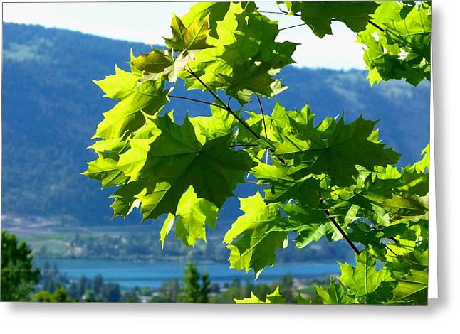 Sunlit Maple Greenery Greeting Card by Will Borden