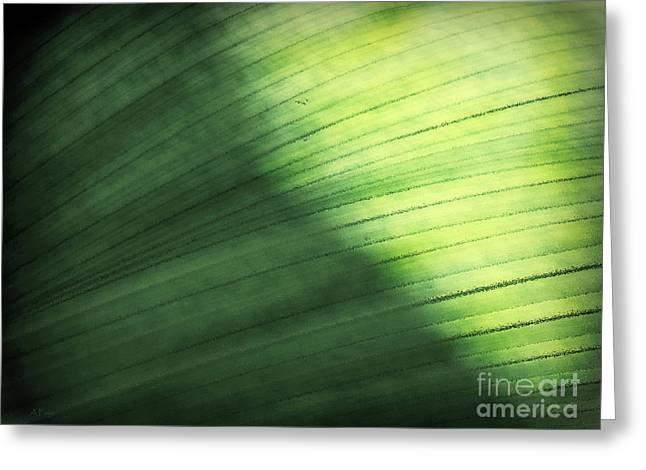 Sunlit Palm Greeting Card by Anita Faye