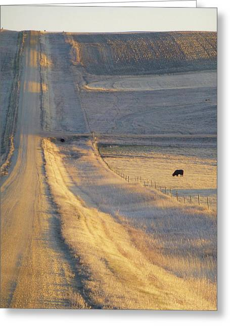 Sunlit Road Greeting Card