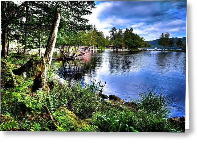 Greeting Card featuring the photograph Sunlit Shore At Covewood by David Patterson