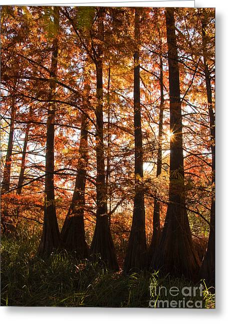 Greeting Card featuring the photograph Sunlit Trees At Lake Murray by Tamyra Ayles