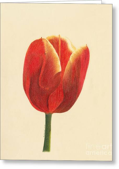 Sunlit Tulip Greeting Card