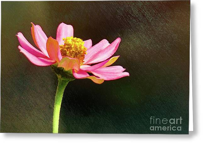 Sunlit Uplifting Beauty Greeting Card