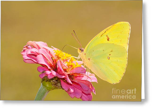 Sunlit Yellow Greeting Card