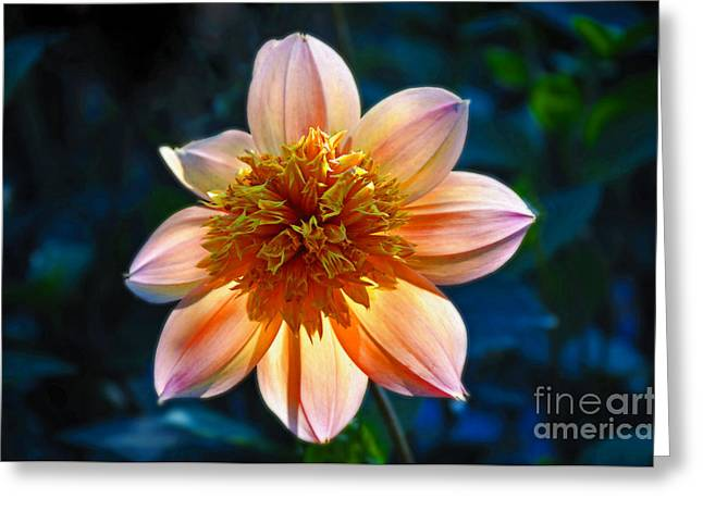 Sunlite Dahlia  Greeting Card