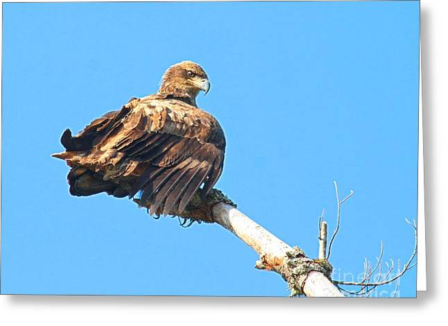 Greeting Card featuring the photograph Sunning Out On A Limb by Debbie Stahre