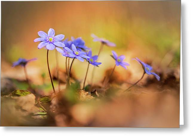 Greeting Card featuring the photograph Sunny Afternoon With Liverworts by Jaroslaw Blaminsky