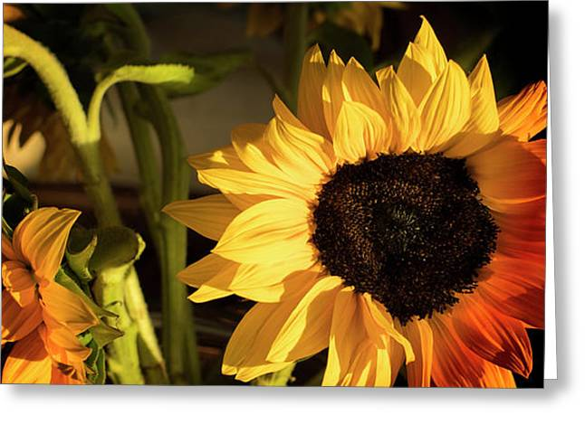 Sunny An Dark Greeting Card by Michael Hope
