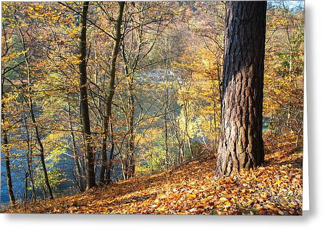 Sunny Autumn On The Lake Greeting Card