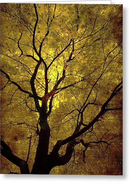 Sunny Branches Greeting Card by Gray  Artus